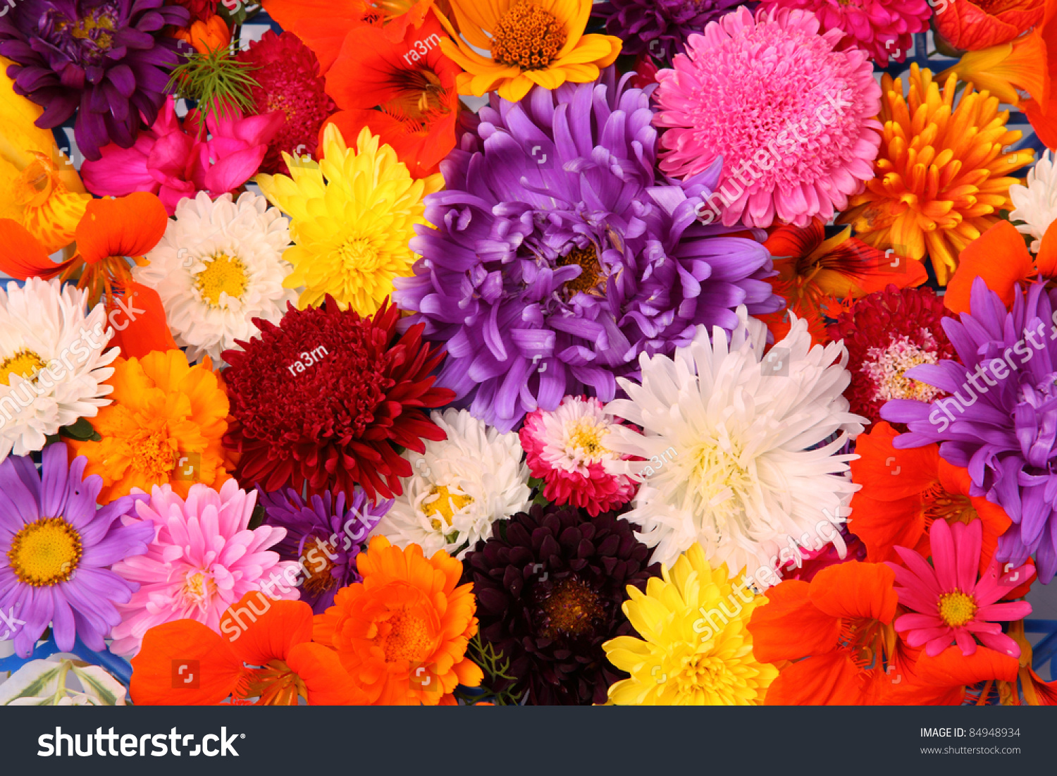 Autumn Flowers Different Colors Floral Background Stock Photo ...