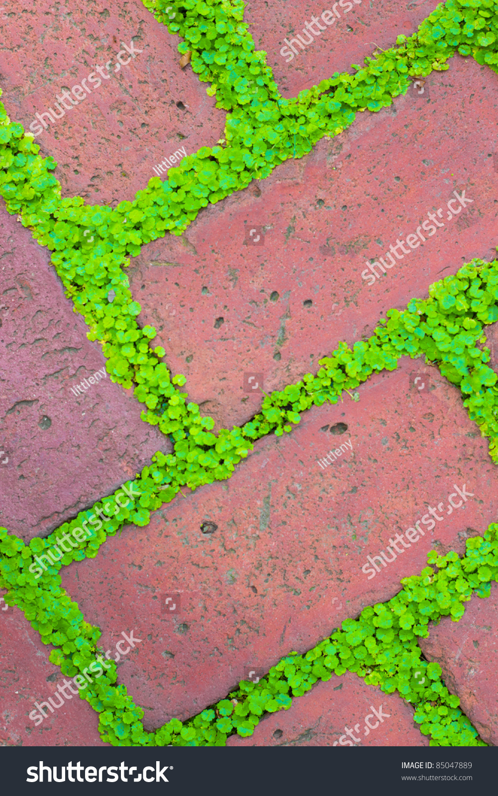 How to plant ground cover between pavers - Detailed Closeup Of Brick Garden Pavers With Green Ground Cover Growing Between