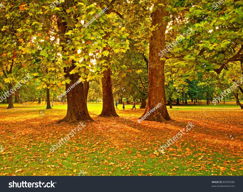 Nice Park Autumn Stock Photo 85095580