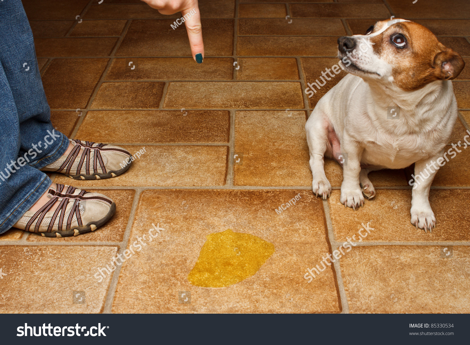 Old Dog Urine On Wood Floors Image Titled Remove Cat