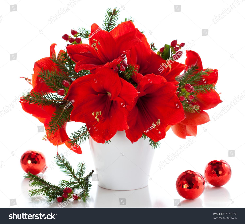 Red amaryllis vase christmas decorations stock photo for Amaryllis christmas decoration