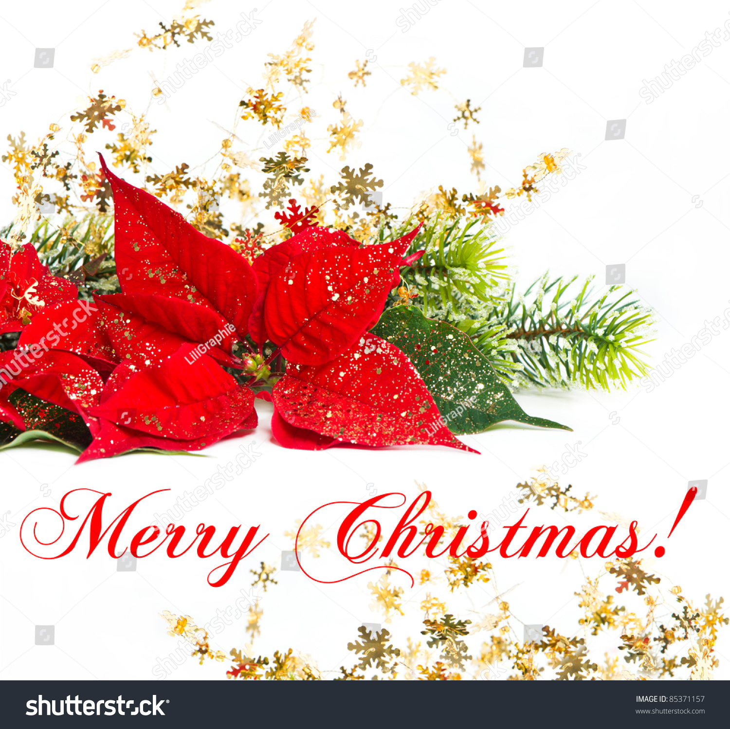 red poinsettia christmas flower with golden decoration merry christmas card concept - Christmas Poinsettia