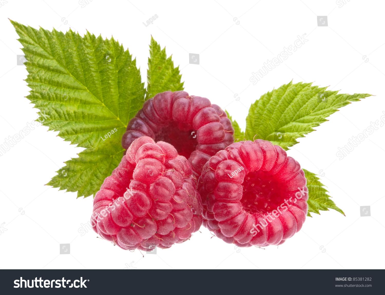 Raspberry Fruit Closeup Isolated On White Background Stock Photo ...