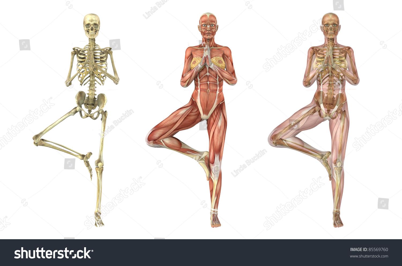 Woman Stands Yoga Tree Pose Anatomical Stock Illustration 85569760 ...