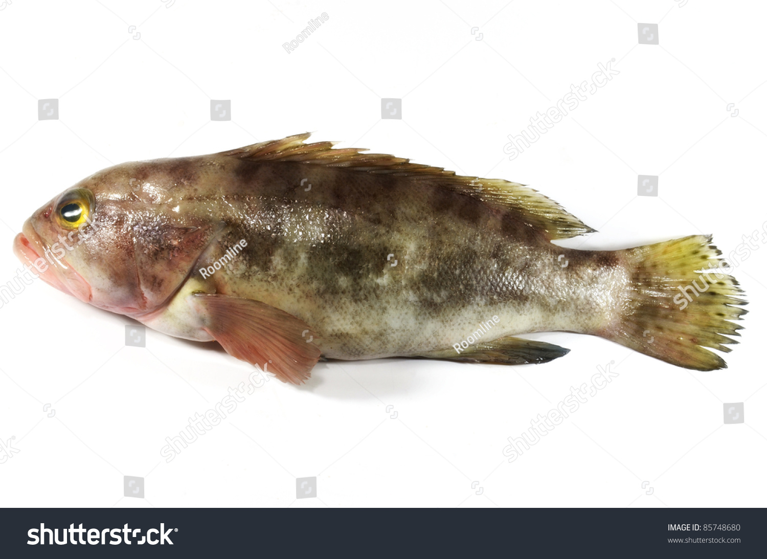 Grouper fish isolated on white fish is cooking and for Cooking white fish