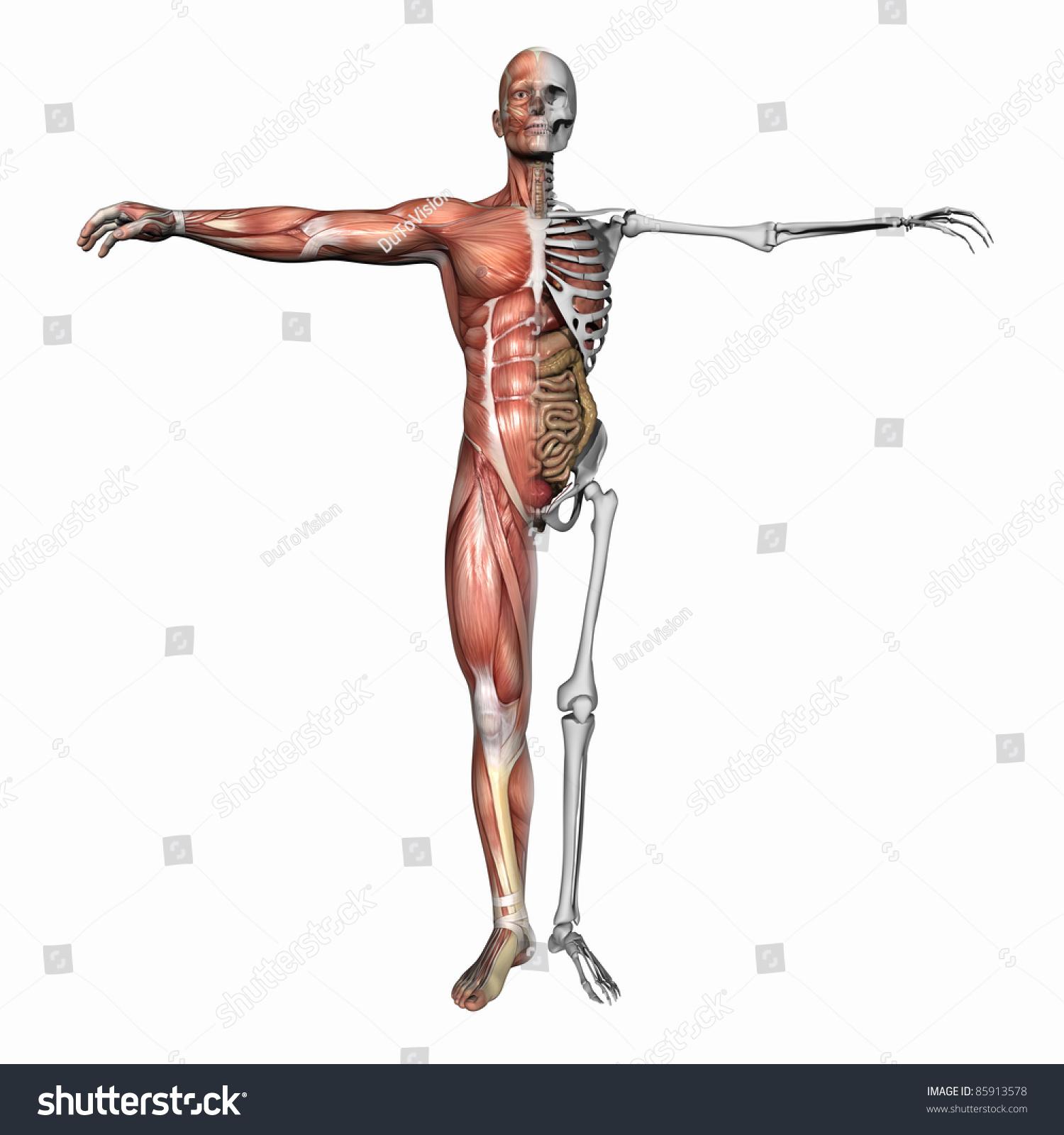 high resolution 3d illustration human skeleton stock illustration, Skeleton