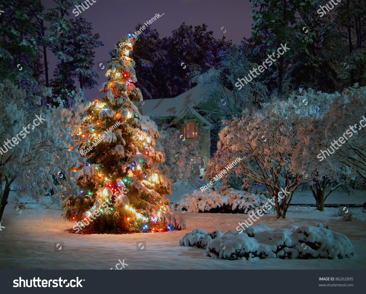 snow covered outdoor christmas tree with multicolored. Black Bedroom Furniture Sets. Home Design Ideas