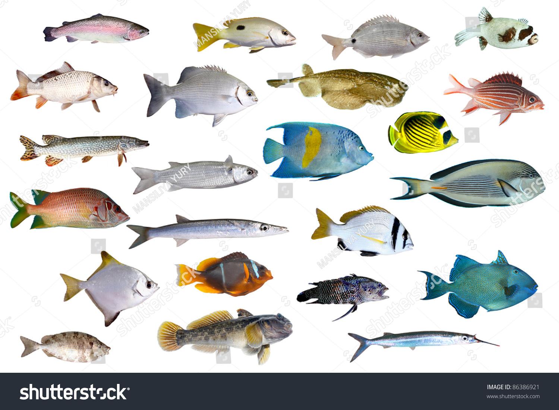 Tropical ocean fish names for Names of fish