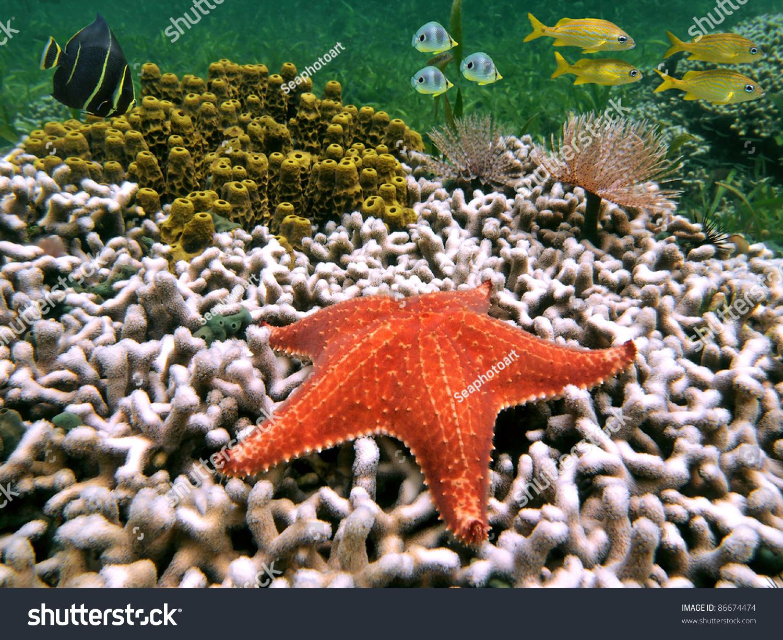 Sea Bottom Of The Sea Fish Seabed Sea: Underwater Life On Seabed Caribbean Sea Stock Photo