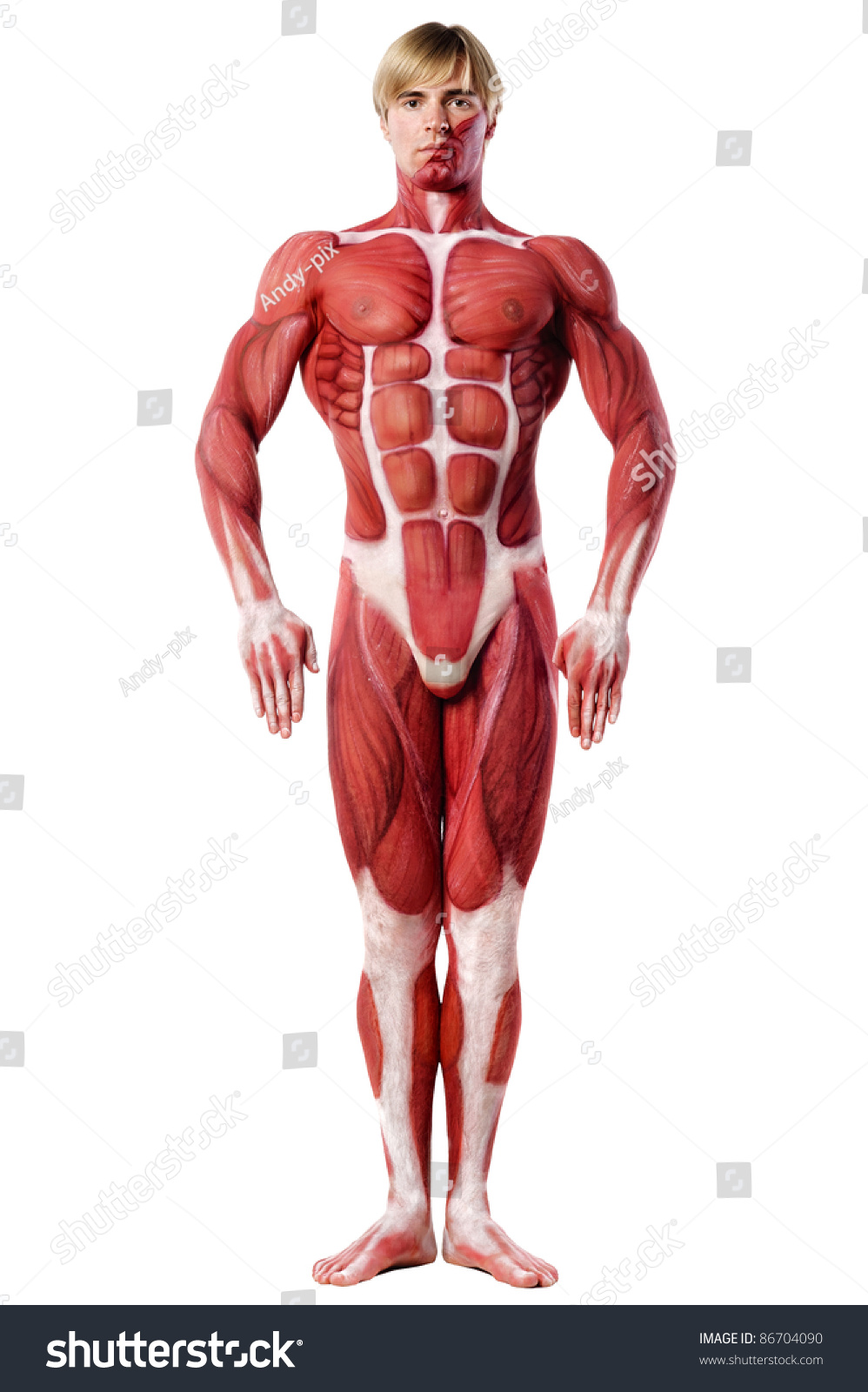 muscle man front view. Anatomy body-art. Isolated over white | EZ Canvas