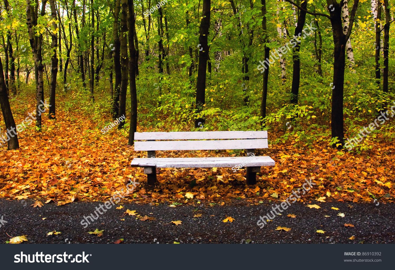 Autumn Park Single Bench Nice Background Stock Photo