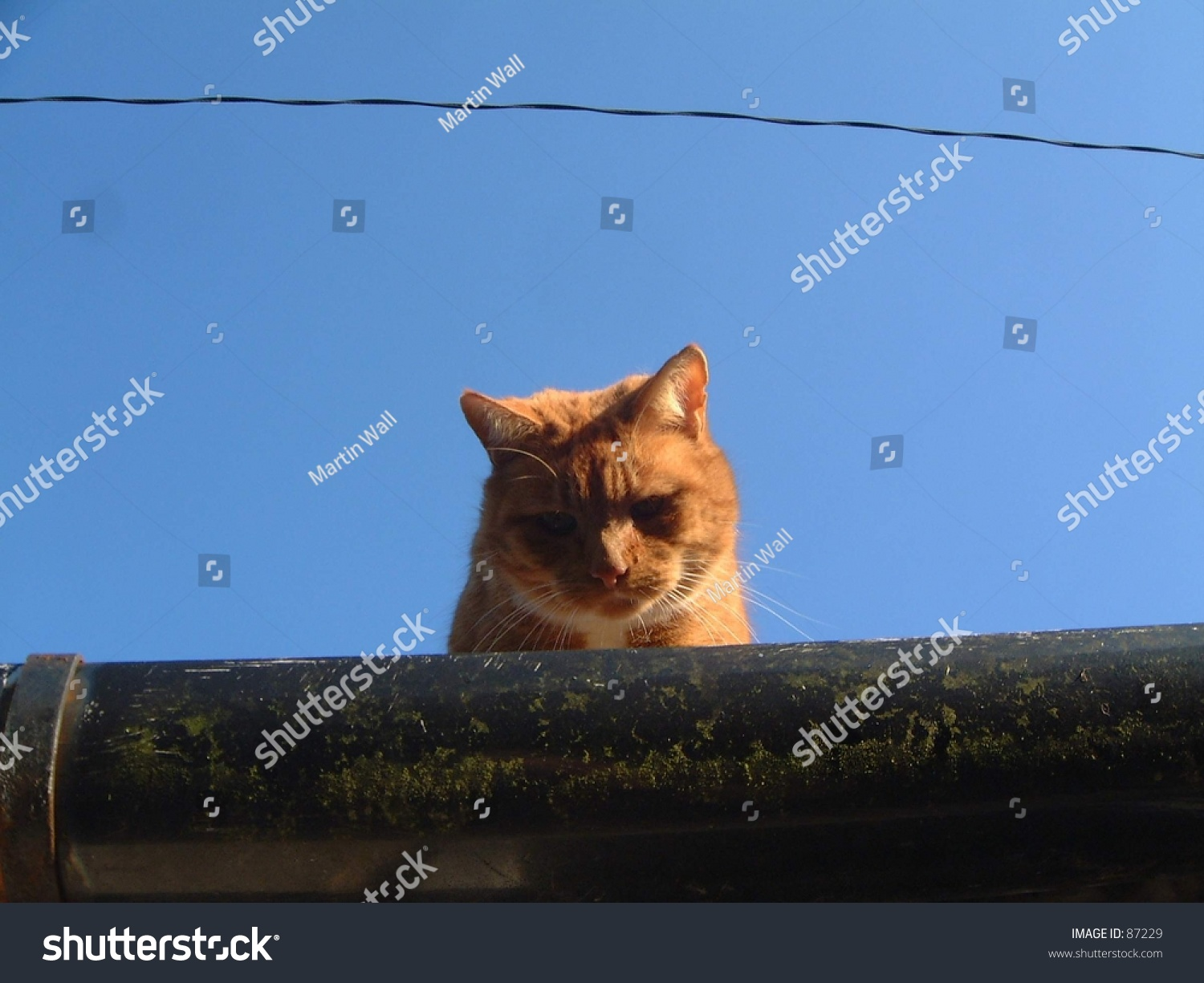 Cat Roof Ginger Tom Ears Blue Stock Shutterstock