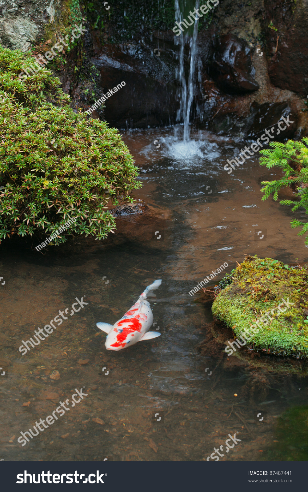 A Japanese Carp In The Pond Stock Photo 87487441