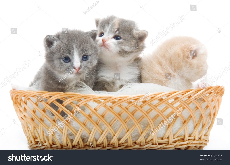 Small Cute Kittens Sitting Basket Closeup Stock