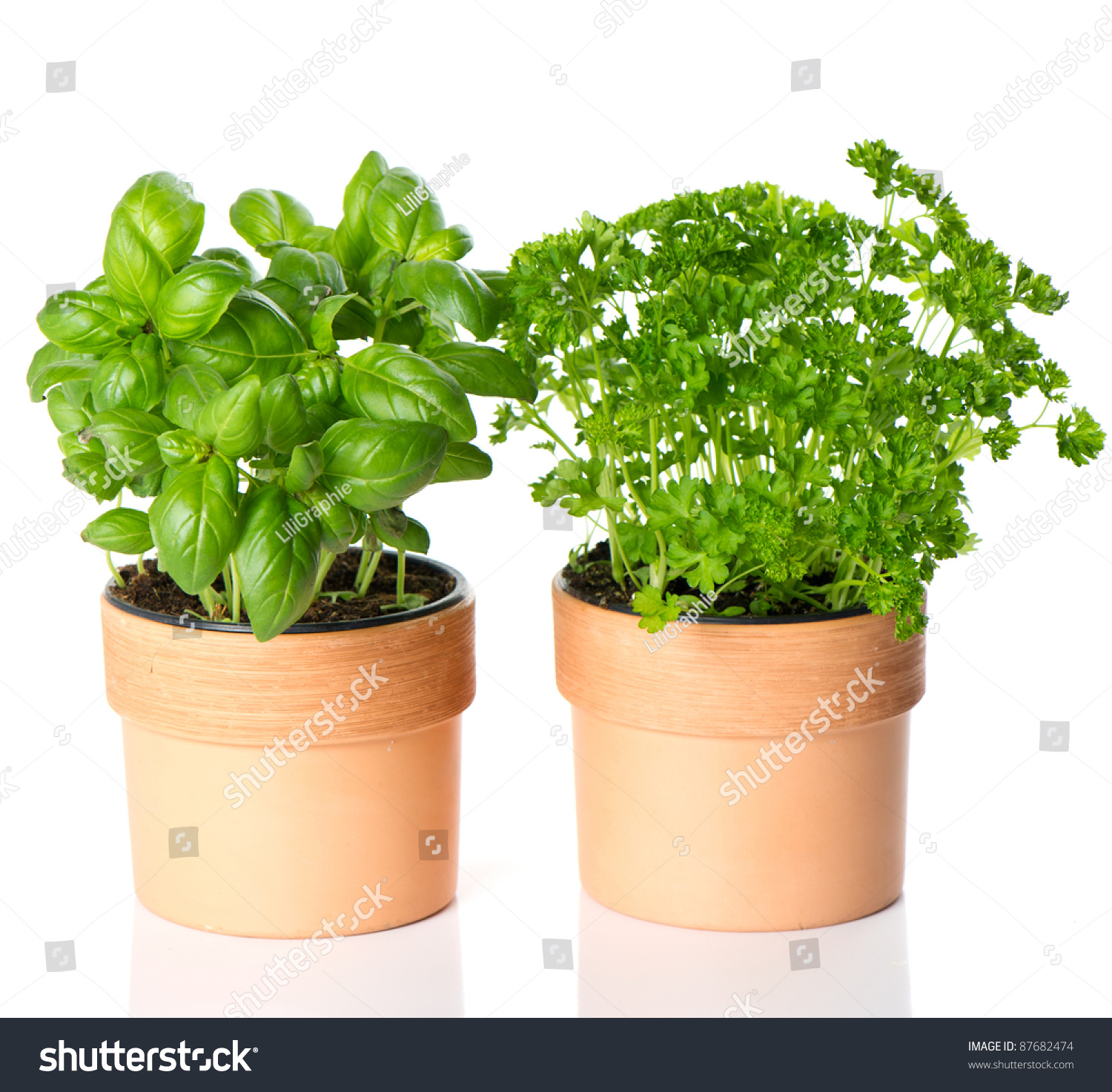 Herb pots for kitchen - Kitchen Herbs Basil And Parsley In Pots On White Background