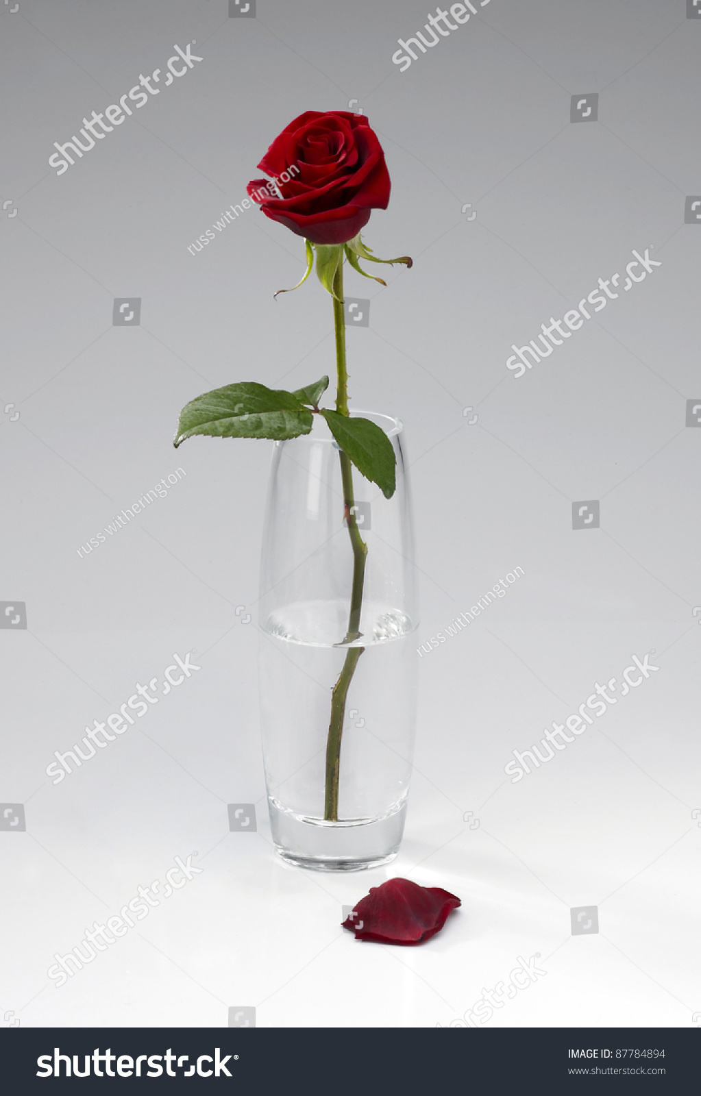 Single red rose stems glass vase stock photo 87784894 shutterstock a single red rose stems in a glass vase with two fallen petals in front against reviewsmspy