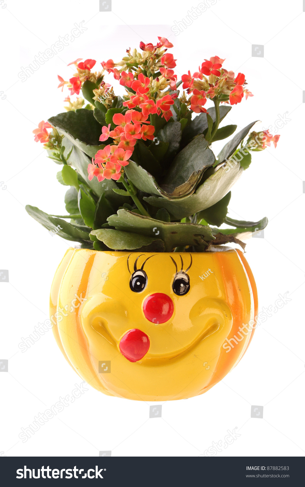 Flowers pot happy face painted on stock photo royalty free flowers in a pot with a happy face painted on isolated on white izmirmasajfo