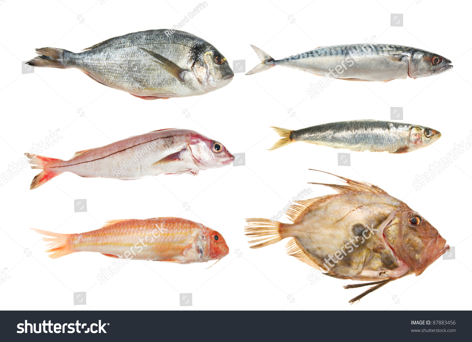 Selection of fresh raw fish bream haddock red mullet for Picture of dory fish