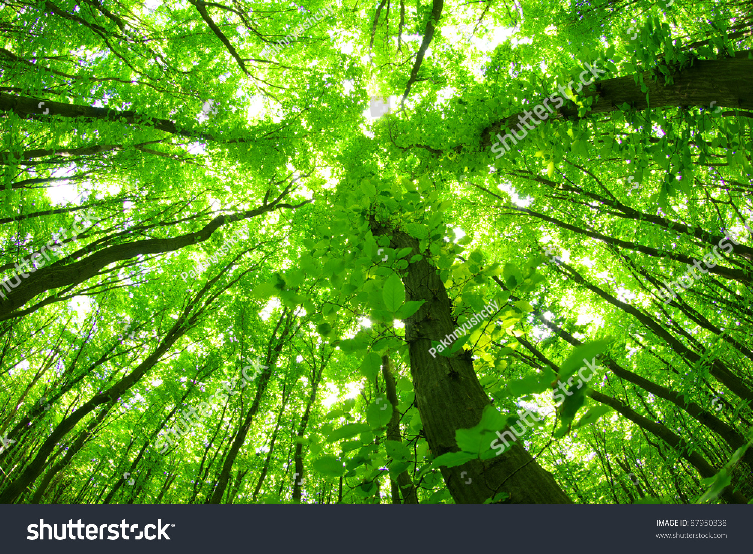Green Forest Background In A Sunny Day Stock Photo