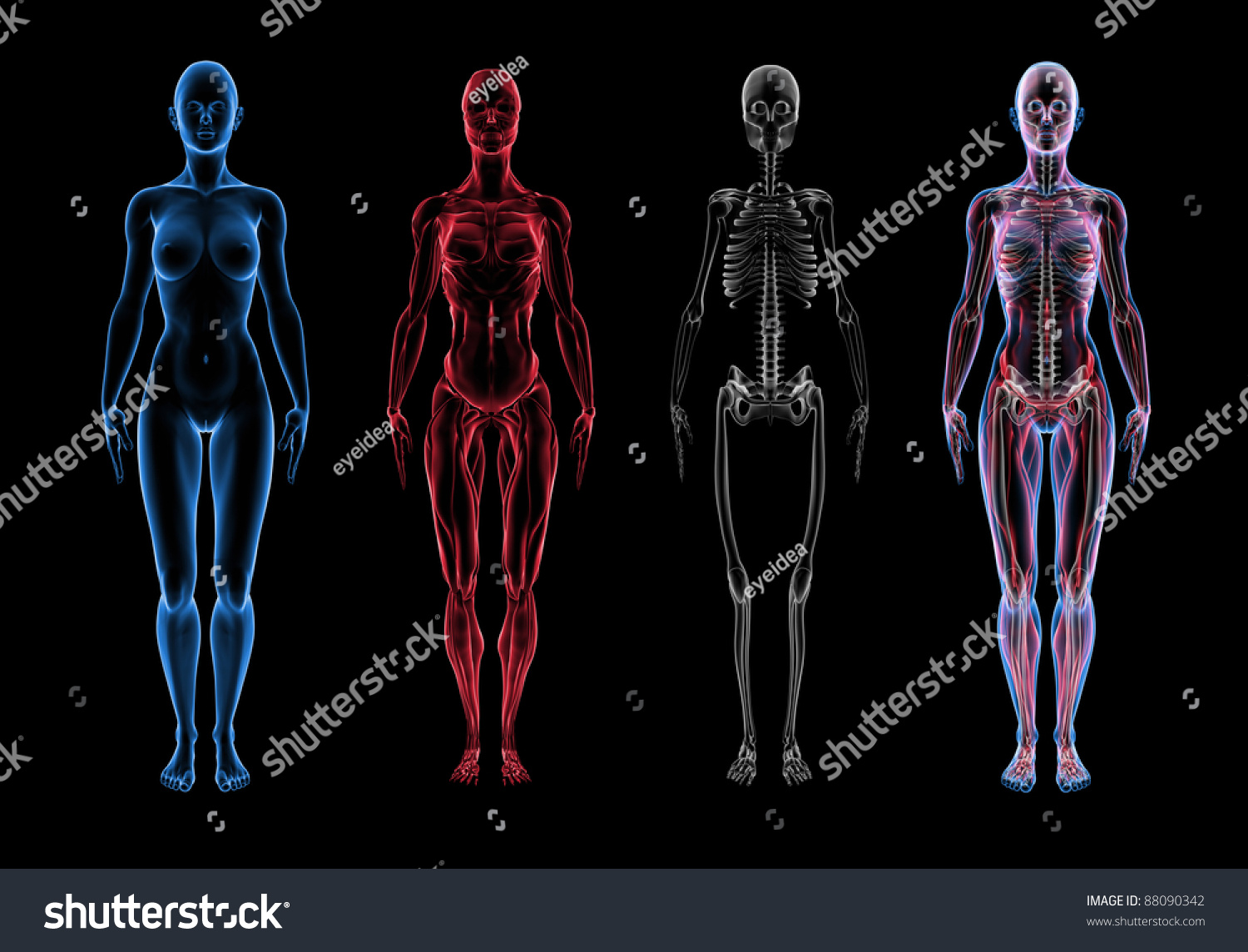 Pictures of female anatomy