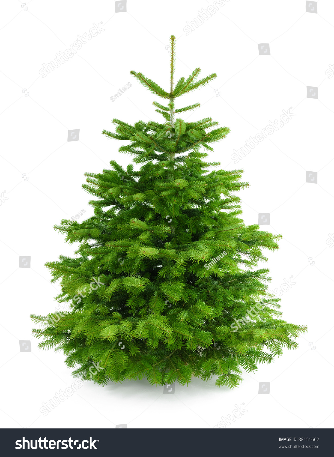 studio shot of a fresh gorgeous christmas tree without