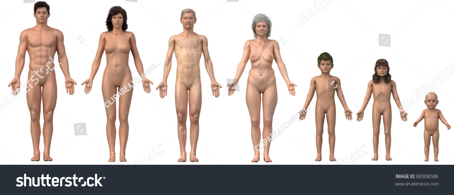 Whole Family Anatomical Position Any Bust Stock Illustration ...
