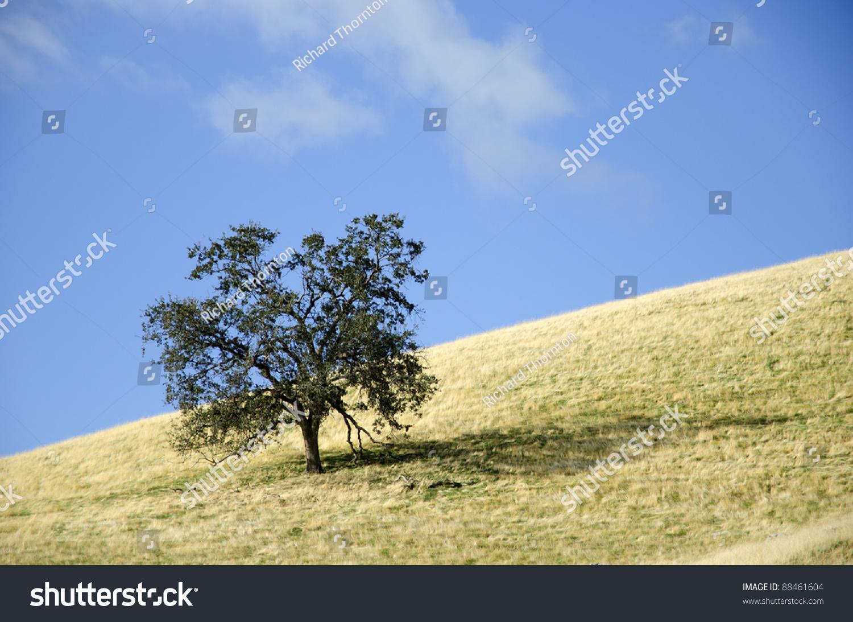 lone oak black singles Date smarter date online with zoosk meet lone oak single women over 50 online interested in meeting new people to date black single women in lone oak.