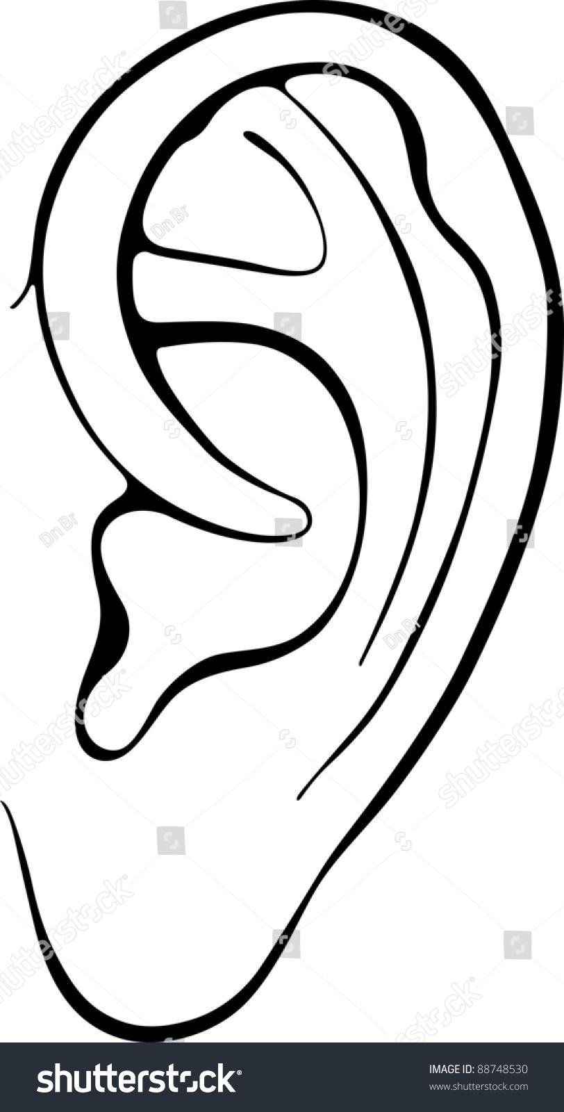 Human Ear Stock Vector Illustration 88748530 : Shutterstock