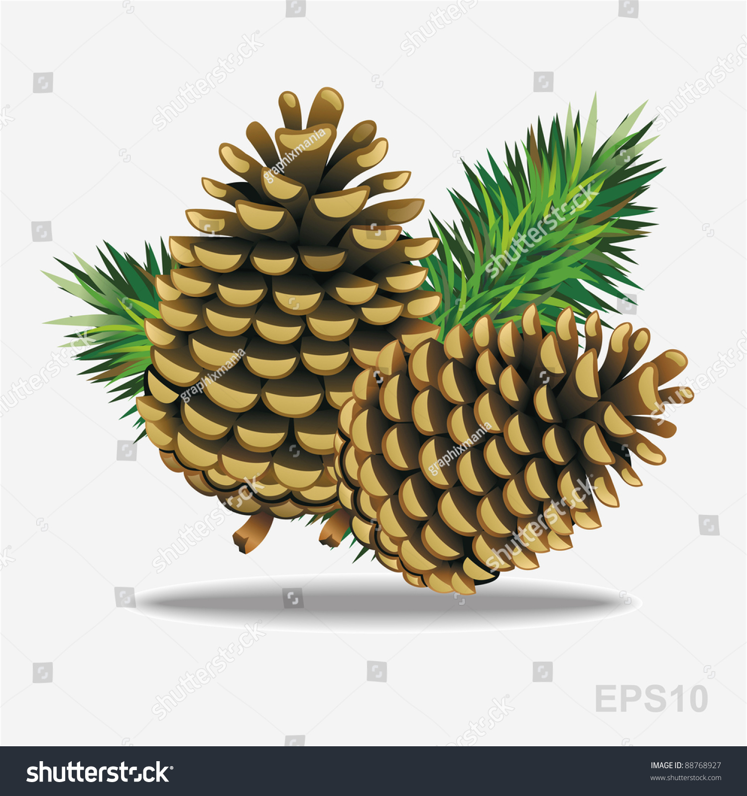 Pine Cone Illustration Pine Cones Pine Needle...