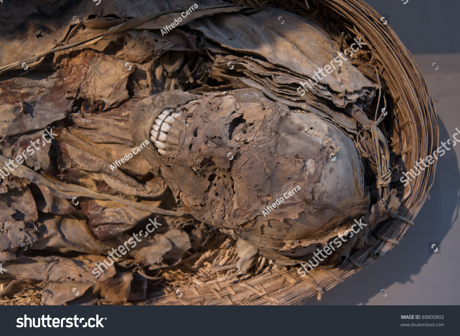 egyptian mummy stock photo 88809802 shutterstock