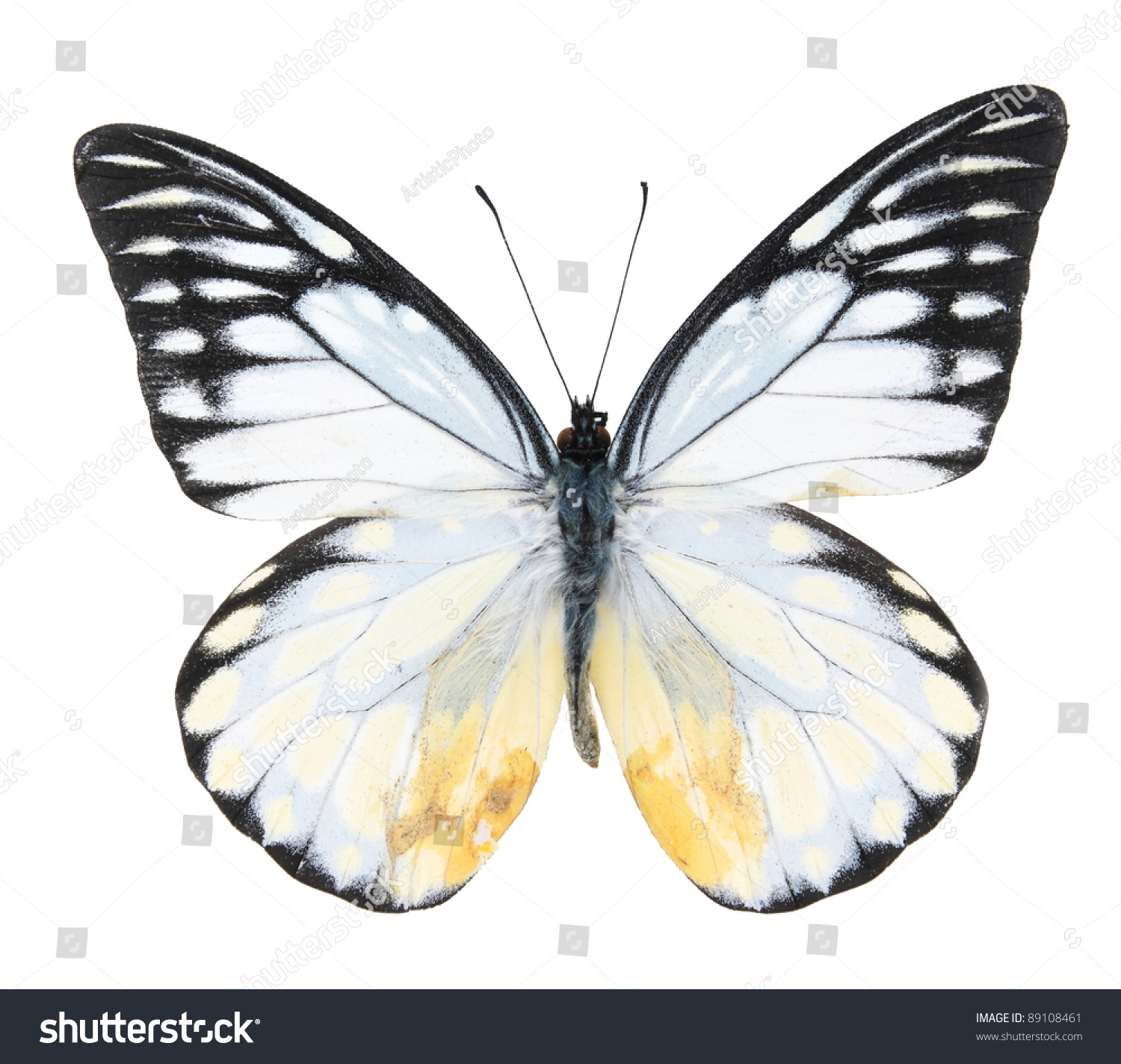 White And Black Butterfly On Isolated White Background ...