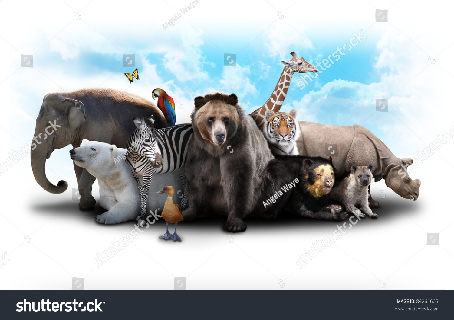 A Group Of Animals Are Grouped Together On A White ...