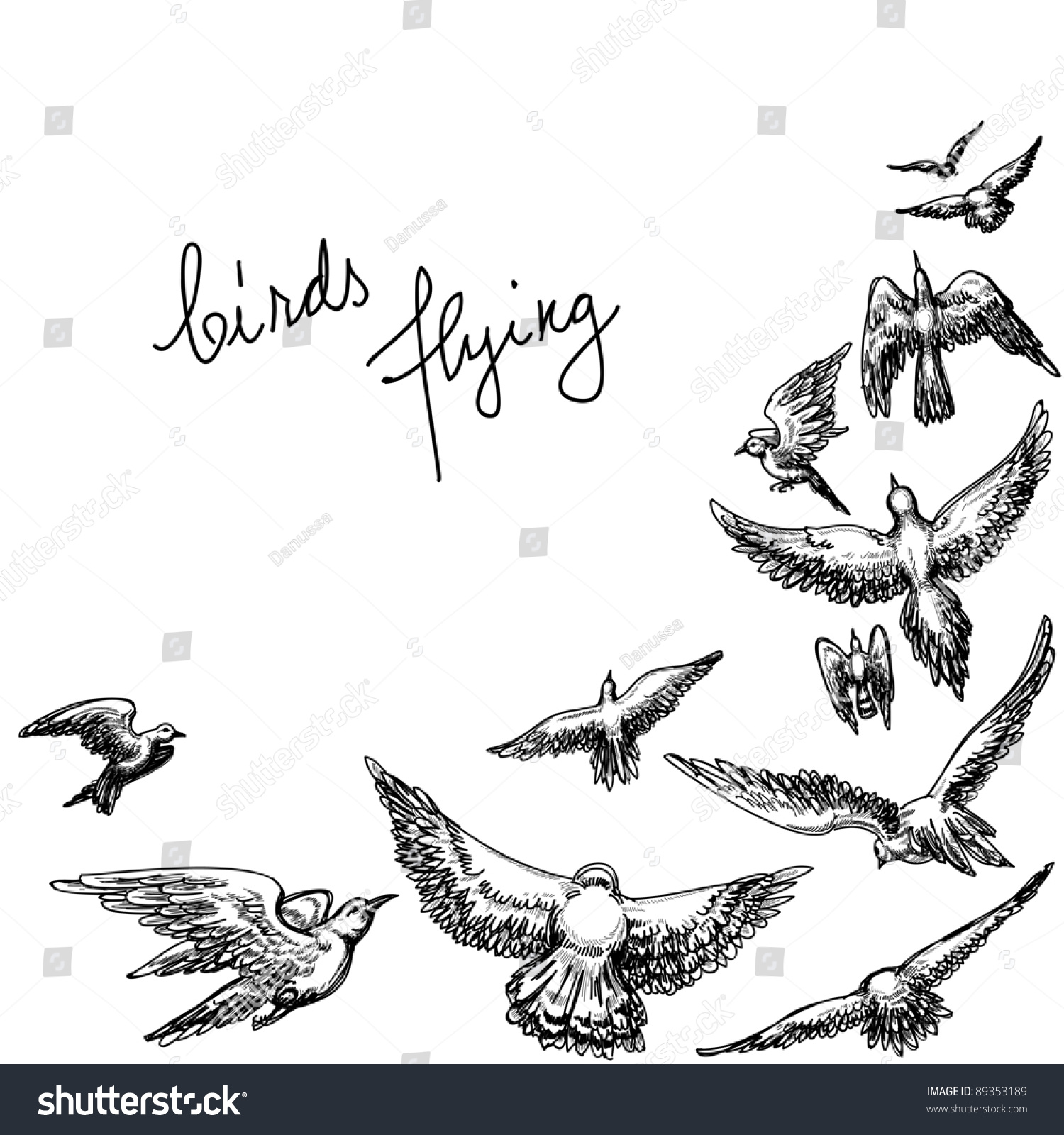 Set of sketches of flying swallows stock vector illustration - Flying Birds Background Pencil Drawing Vector Illustration
