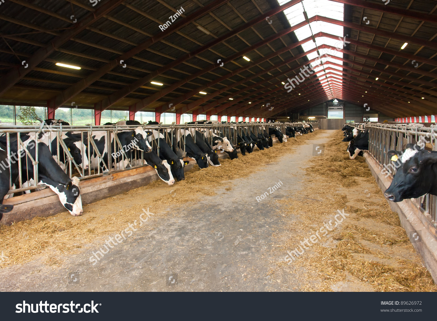 ^ Modern Farm owshed Milking ows ating Stock Photo 89626972 ...
