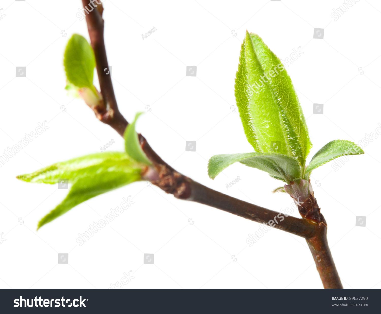 u0424u043eu0442u043e: Spring budding.