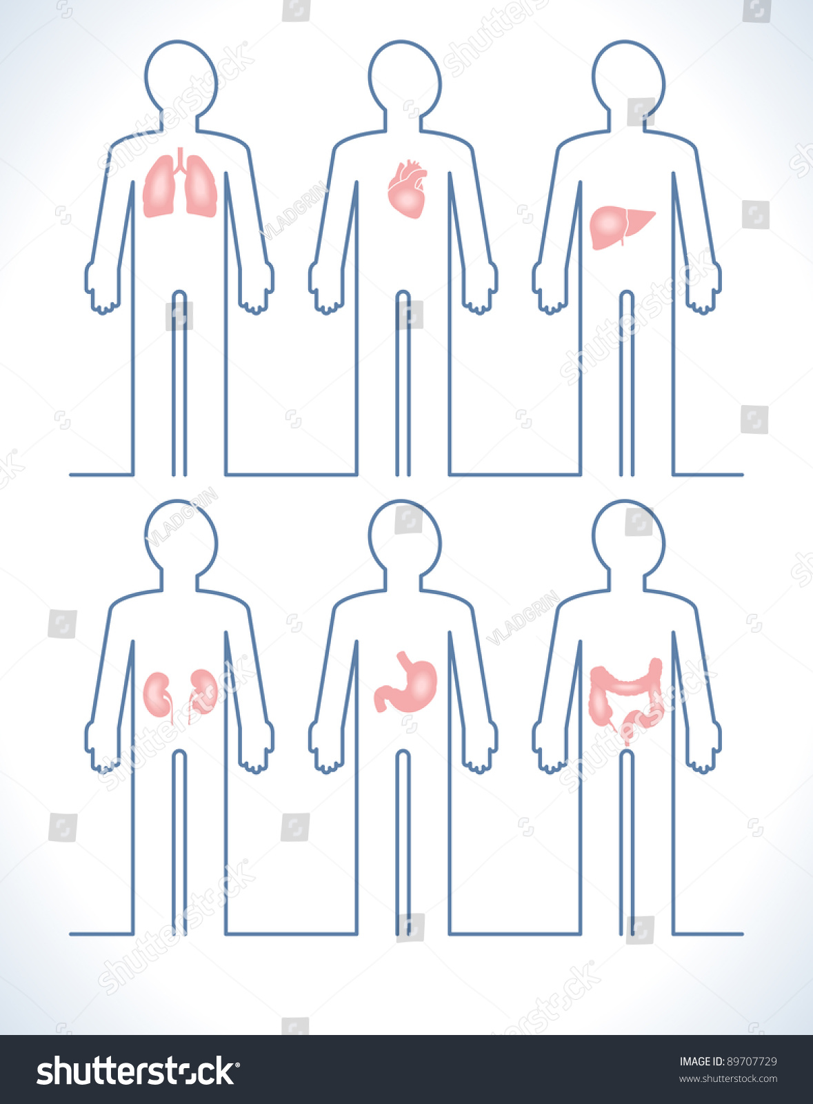 Set Human Anatomy Parts Liver Heart Stock Vector Royalty Free
