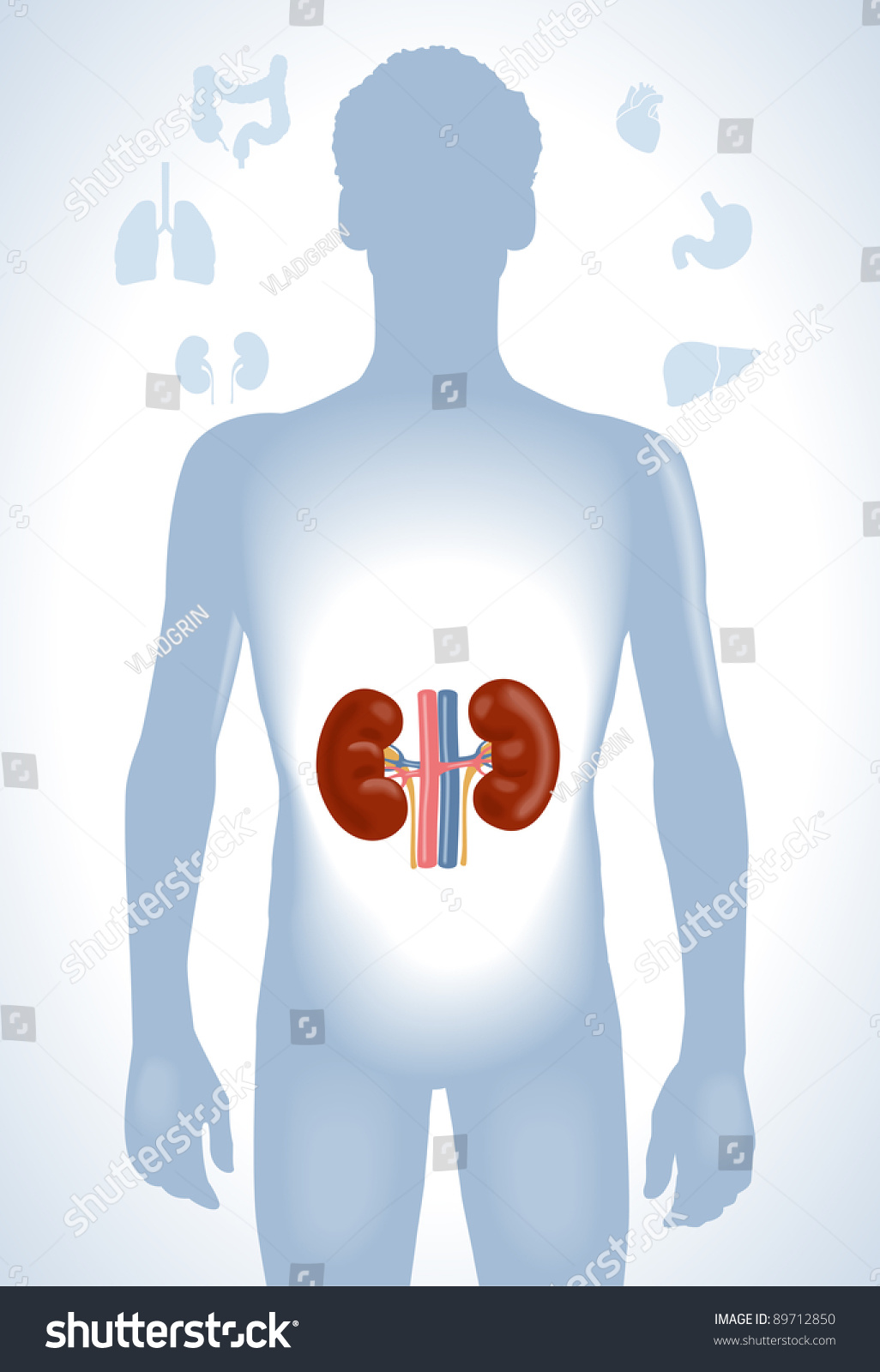 Set human anatomy parts liver heart stock vector 2018 89712850 set of human anatomy parts liver heart kidney lung stomach and ccuart Choice Image