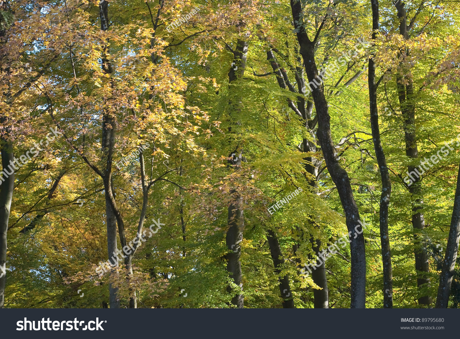 Peaceful Tree Landscape Early Autumn Colors Stock Photo (Royalty ...