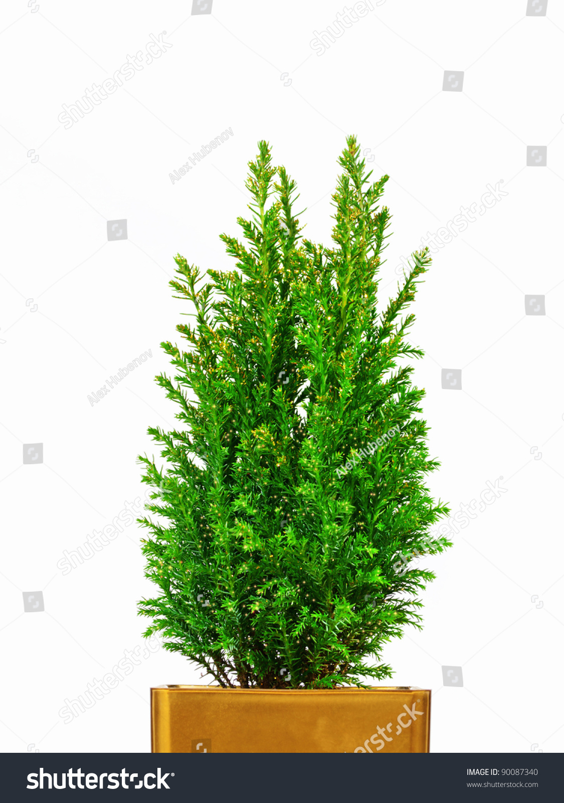 Real Mini Christmas Tree In A Pot Stock Photo 90087340 ...