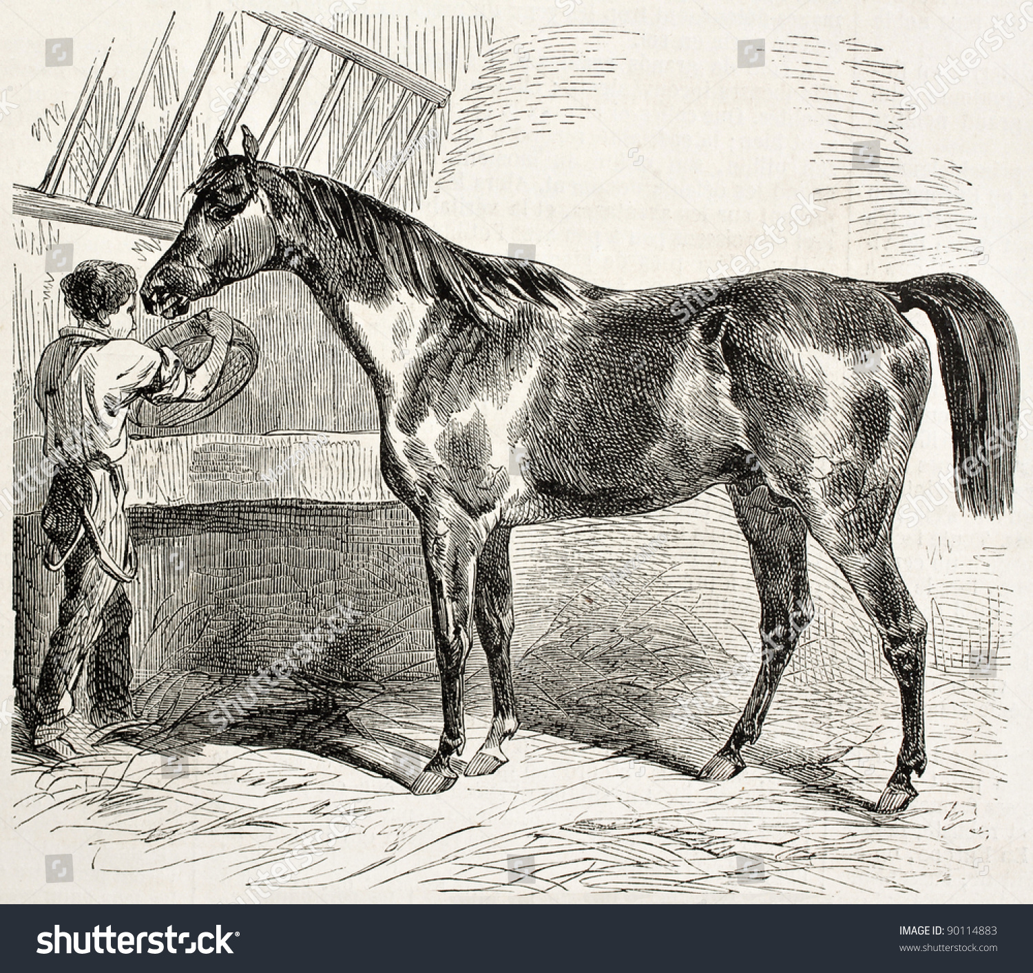 Thoroughbred English Horse Old Illustration By Stock Photo Edit Now 90114883