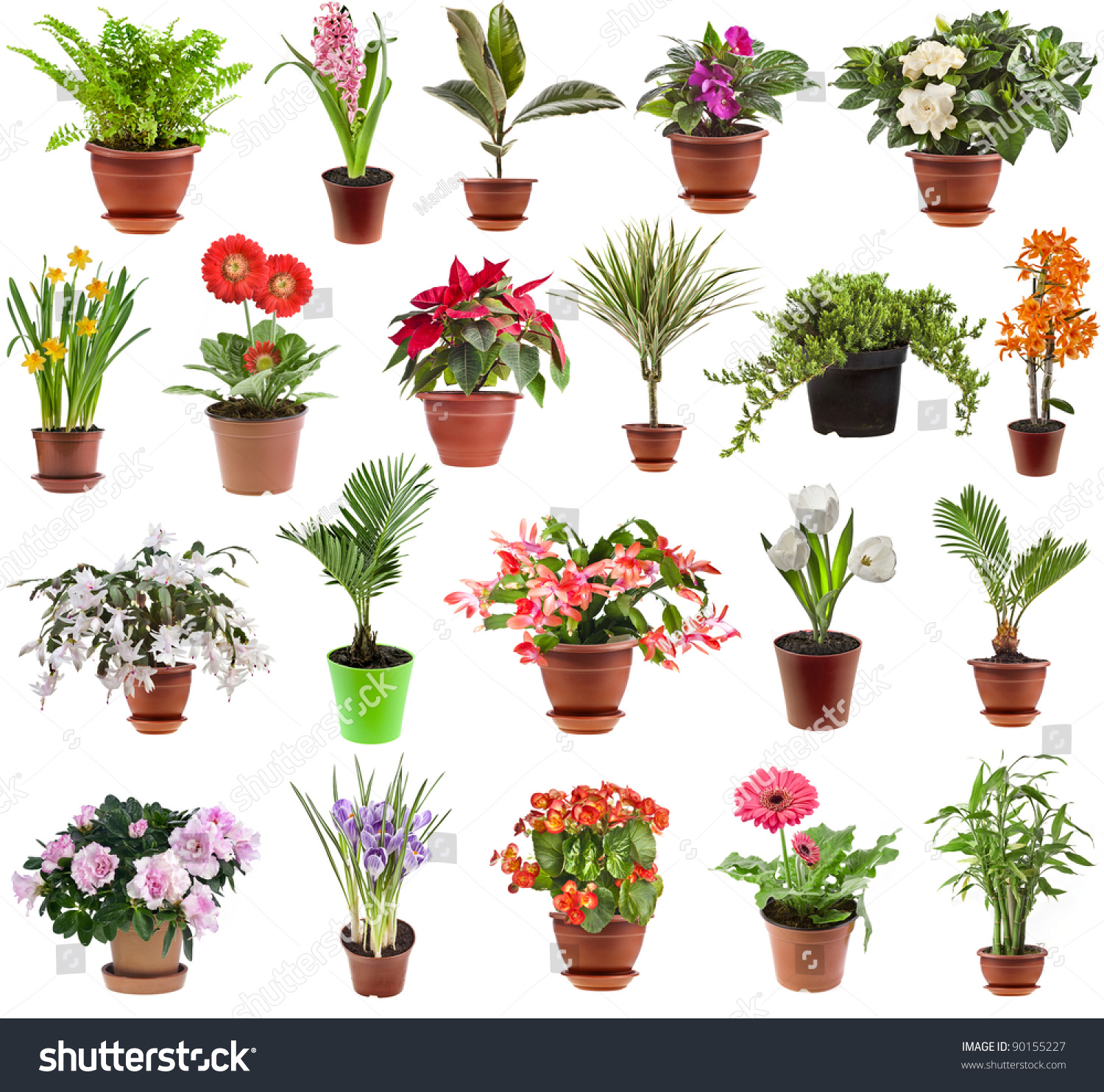 Collection set houseplants flower pot isolated stock photo 90155227 shutterstock - In home plants ...