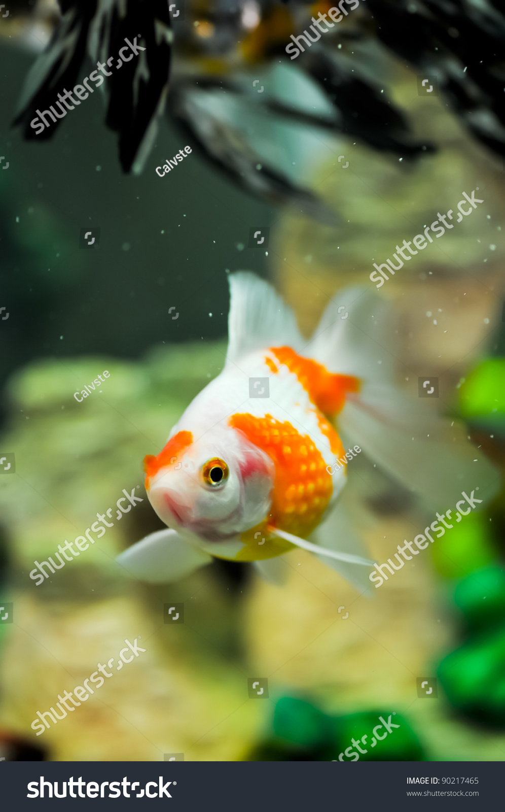 how to cycle a fish tank with goldfish