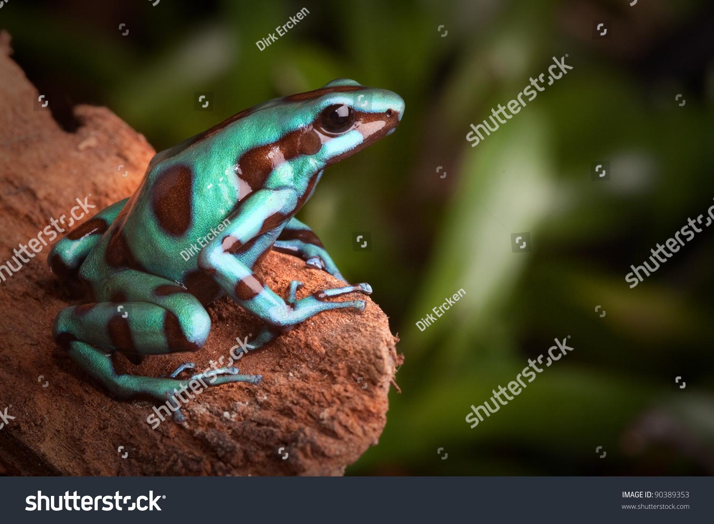Poison dart frog colors