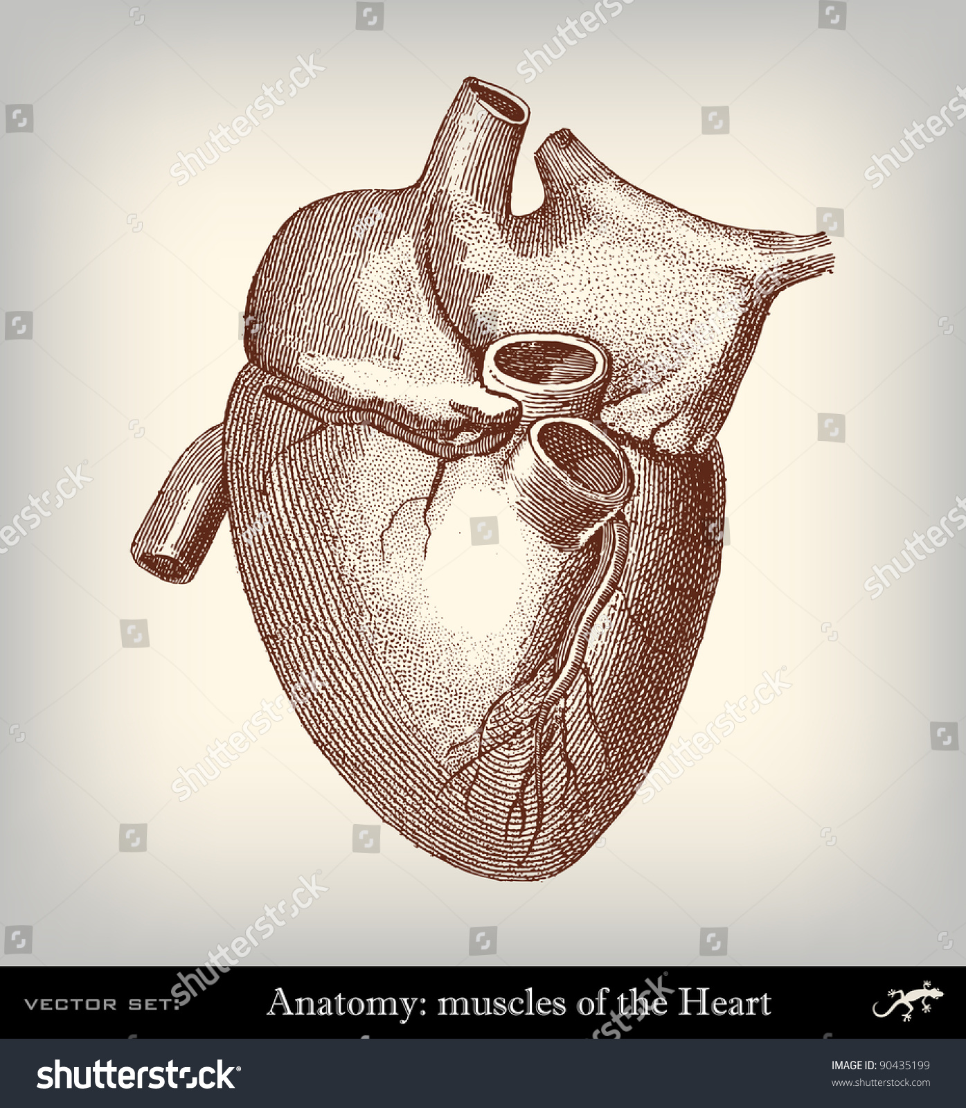 Engraving Vintage Heart The Complete Encyclopedia Stock Photo (Photo ...