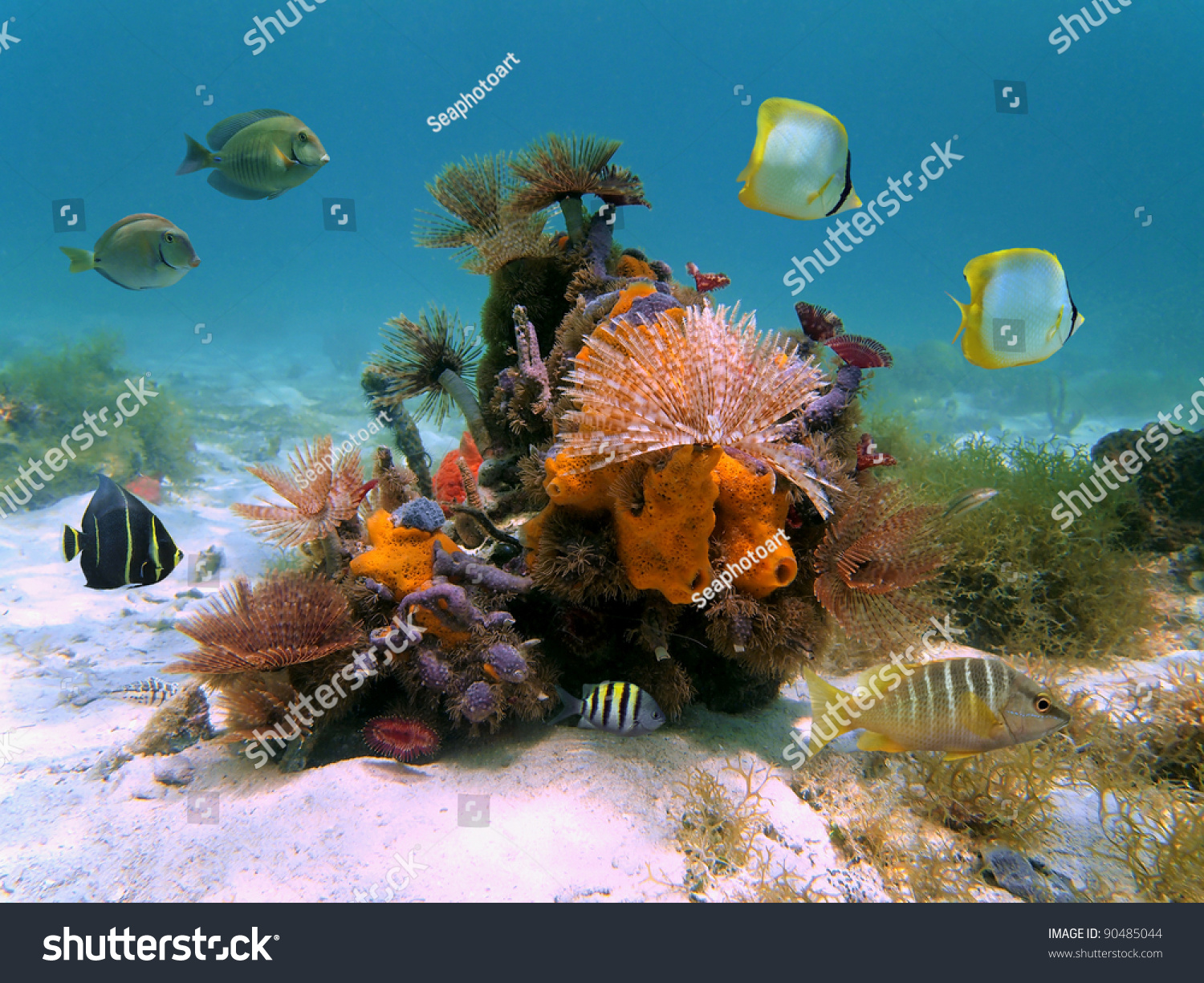 Underwater Colorful Marine Life With Marine Worms Sponges