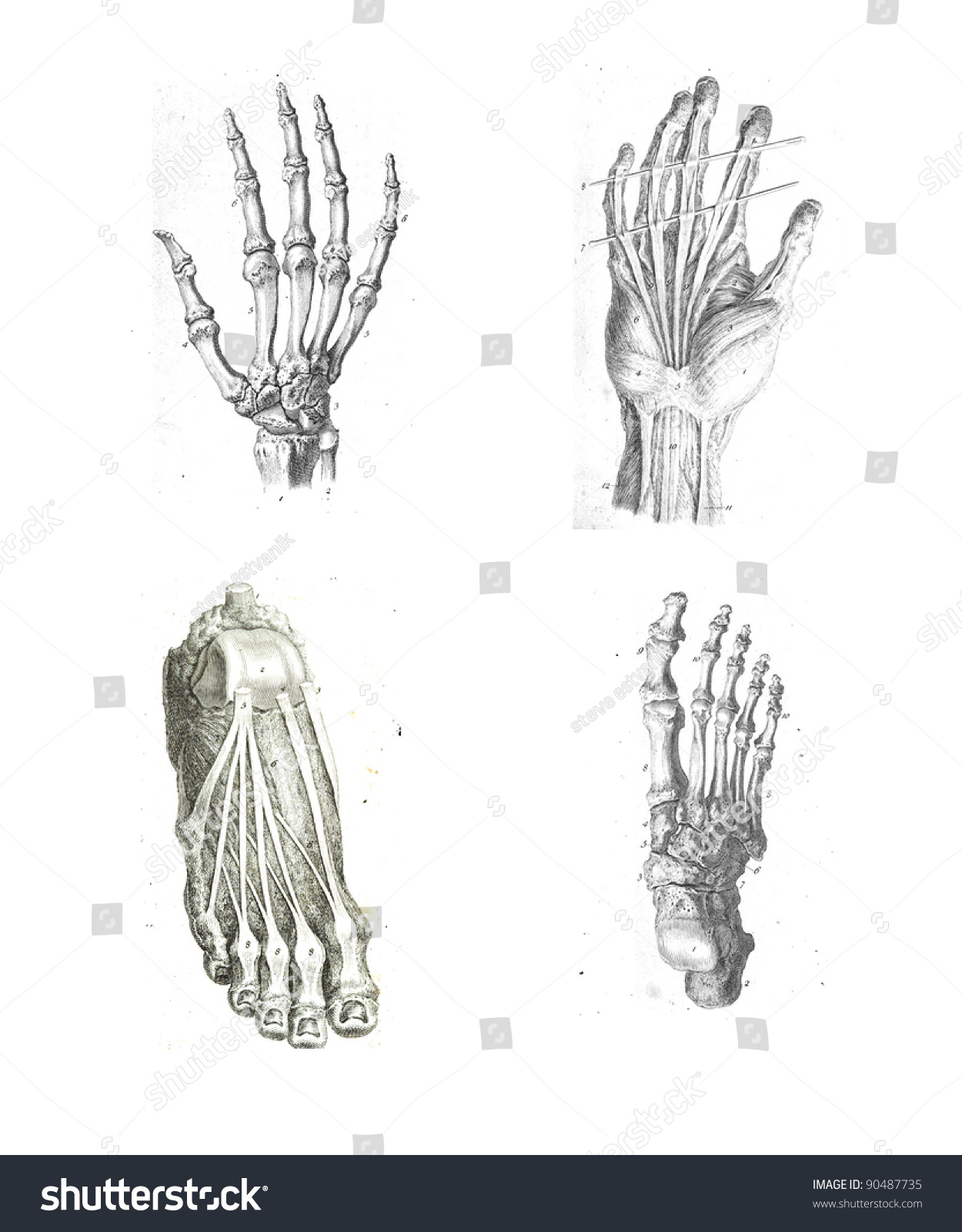 4 Views Human Hand Foot Anatomy Stock Photo Royalty Free 90487735