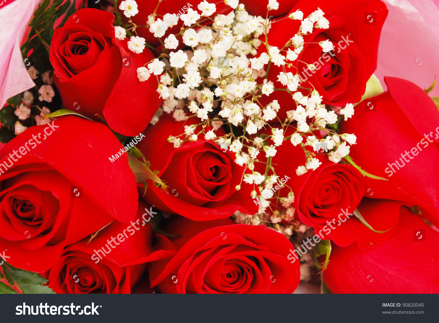 Fresh Red Roses Background Very Little Stock Photo Edit Now