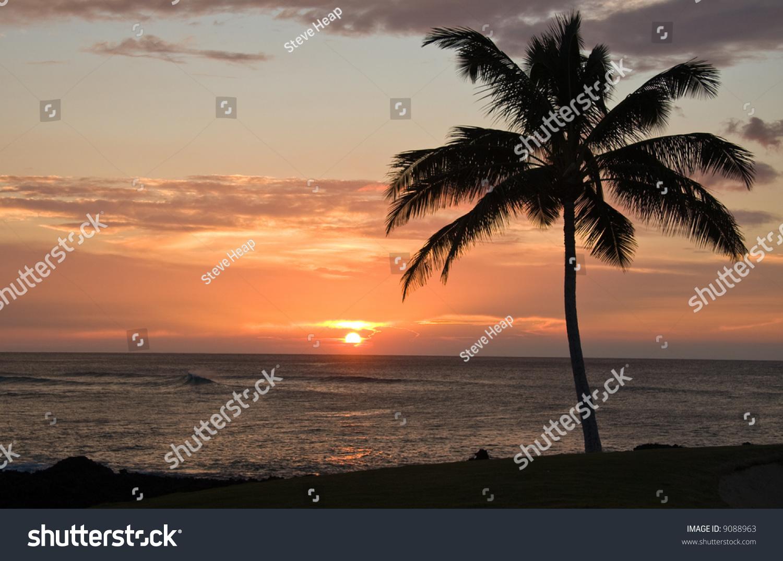 Single Palm Tree Framing Hawaiian Sunset Stock Photo (Edit