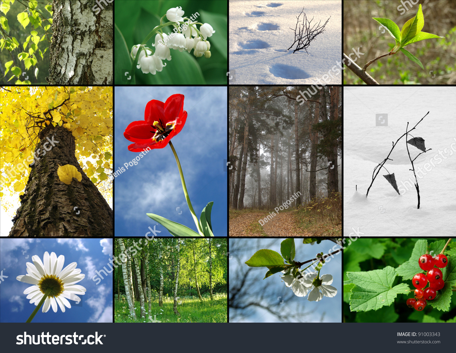 spring collages | Spring season - nature collage with sakura ...