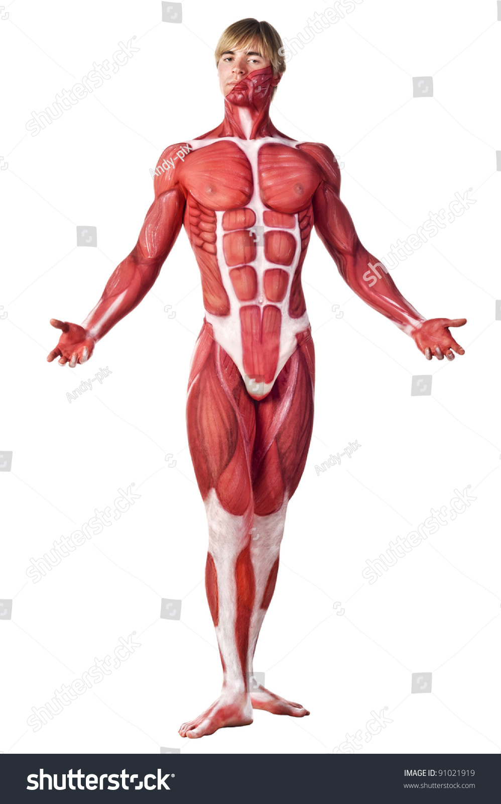 Muscle Man Front View Anatomy Body Art Isolated Over White Ez Canvas